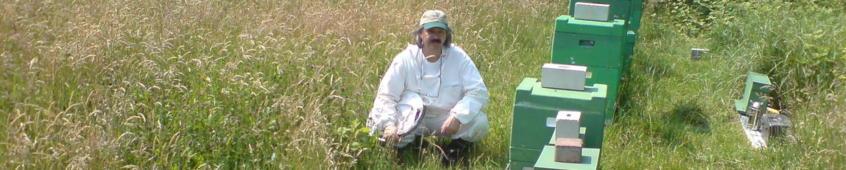 Imkerei Bienen - Bruchmann